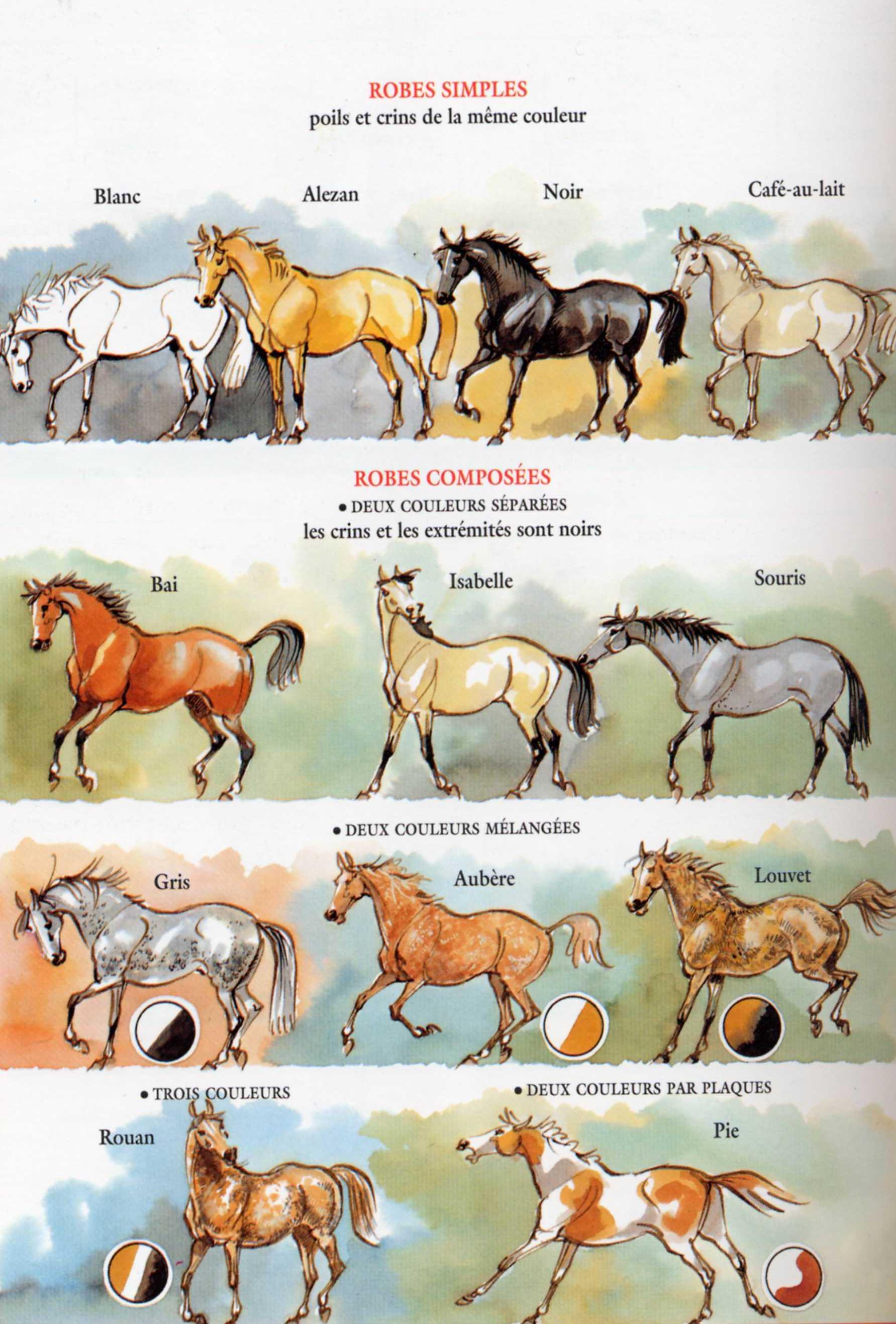 http://horses80.h.o.pic.centerblog.net/w8n0aa70.jpg